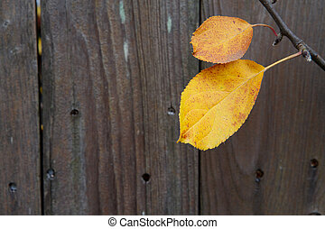 Cherry tree leaves fence