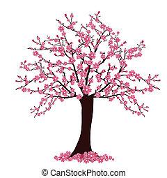 cherry tree - vector illustration of many cherry blosoms on ...