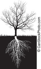 black and white illustration of a leafless cherry trees with roots