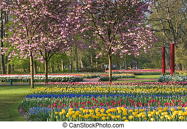 Cherry trees and tulips in spring