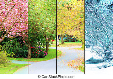 Cherry trees in bloom - A tree lined street, photographed in...