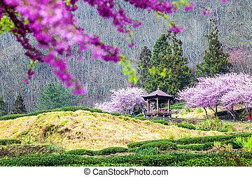 cherry trees on a fresh green lawn