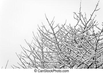 Cherry Treetop under Snow