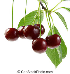 Cherry with green leaves.