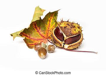 chestnut, acorn and autumn leaf
