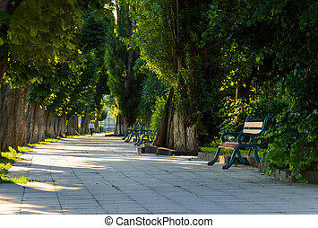 chestnut alley with benches in summertime. beautiful urban...
