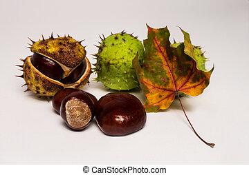 chestnut and autumn leaf