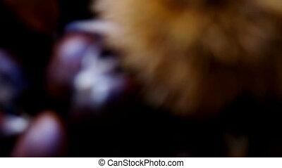 chestnut basket - autumnal background , focusing on chestnut...