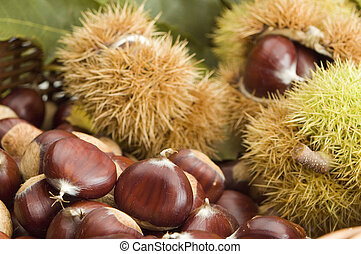 chestnut close up