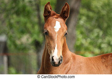 Chestnut cute horse foal portrait in summer outside