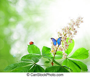 chestnut flower with butterfly