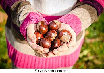 chestnut fruit in hands