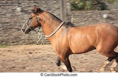Chestnut Horse in motion