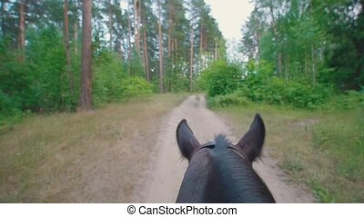 Chestnut horse rides through the pathway in forest, slow...