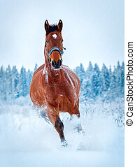 Chestnut horse run gallop in cold winter
