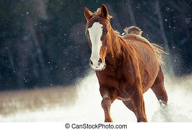 Chestnut horse running in snow