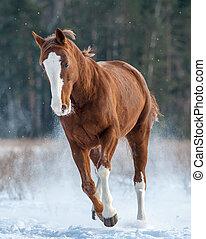 Chestnut horse running in winter