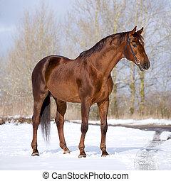 Chestnut horse standing in field.