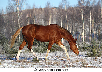 Chestnut horse trotting in the forest