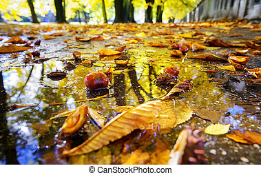 Chestnut in the water