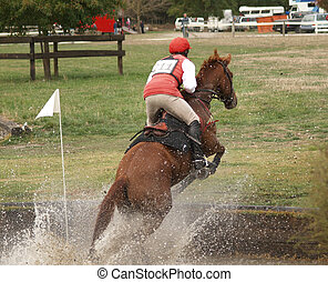 Chestnut in Water - A horse jumping out of the water...