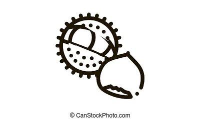 chestnut nut Icon Animation. black chestnut nut animated icon on white background