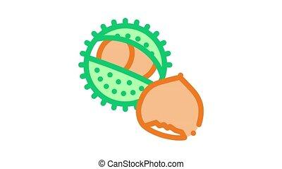 chestnut nut Icon Animation. color chestnut nut animated icon on white background