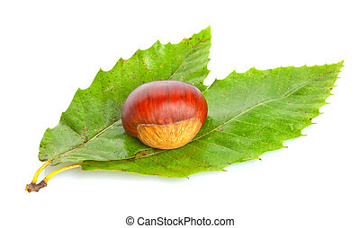 Chestnut with green leaves on white background