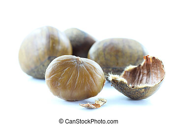 Chestnut on white background.
