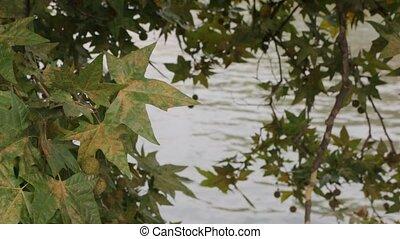 Chestnut Over River Landscape