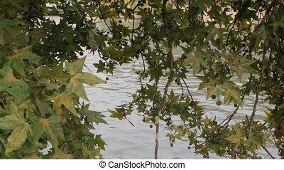 Chestnut Over The River Landscape