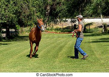 Chestnut Sorrel in Training - Chestnut sorrel gallops around...