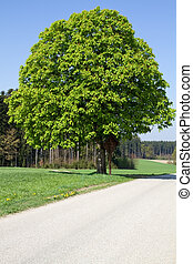 Chestnut tree on a country road in Bavaria