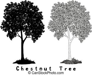 Chestnut tree Silhouette Contours and Inscriptions