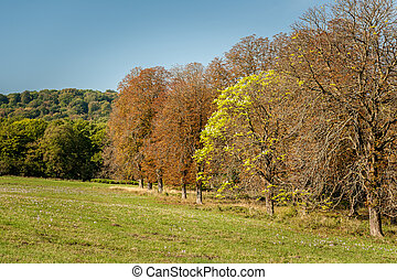 Chestnut trees with brown leaves in autumn