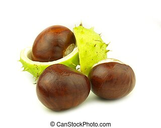 chestnut very close