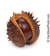Chestnut with crust, isolated on a white background, close-up.