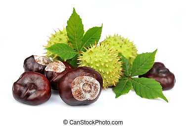 chestnut with leafs on a white background
