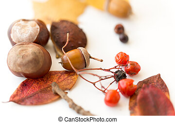 chestnuts, acorn, autumn leaves and rowanberries