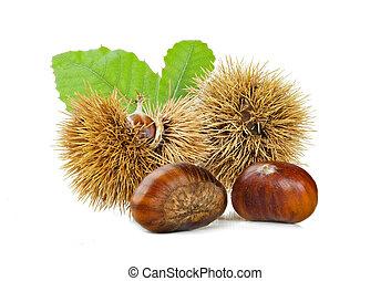 Chestnuts and chestnut bur. - Chestnuts and chestnut bur...