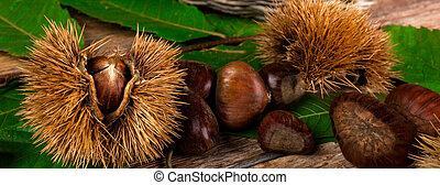 Chestnuts and chestnut bur. - Chestnuts and chestnut bur on...