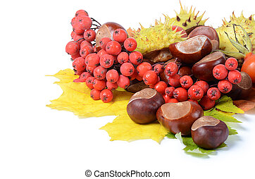Chestnuts on autumn leaves isolated