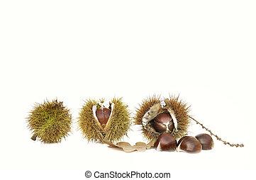 chestnuts on white background