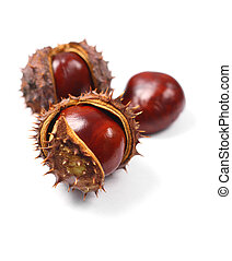 Chestnuts with seed pods over white