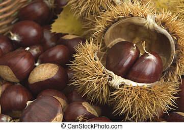 chestnuts close up