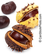 Chestnuts with crust, isolated on a white background, close-up.