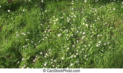 chevêtre, herbe, pelouse, découpage
