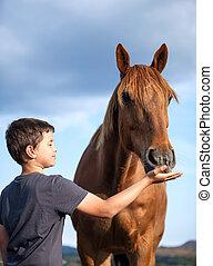 cheval, alimentation, affamé, enfant, honorable, heureux