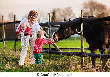 cheval, alimentation, famille, gosses