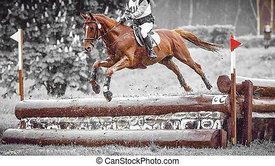 cheval, art, eventing, pays, sauts, pratique, croix, cours, duotone, pendant, cavalier